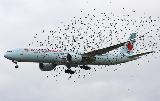 2 - Birds and Air Canada 777