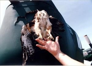 3 - Birdstrike with a C-130-hercules